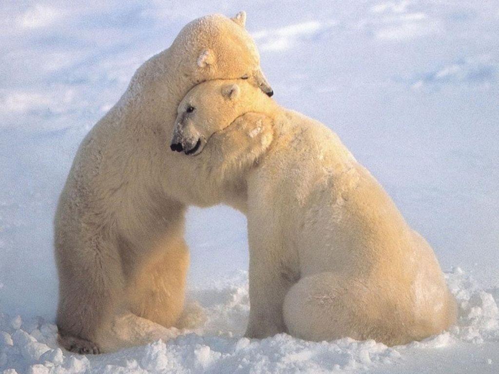 bear sympathy hug.jpg