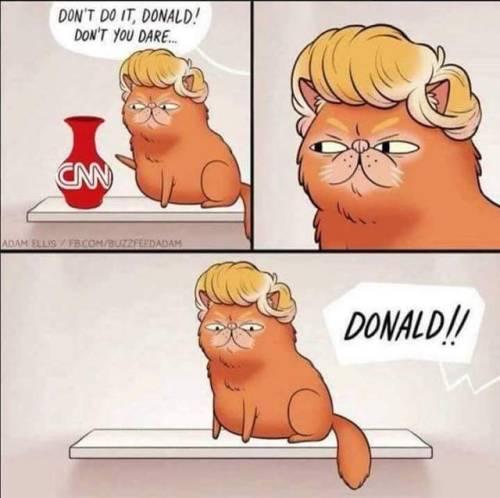 Donald the cat.jpg
